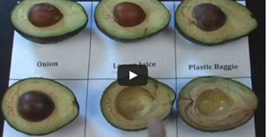 Avocado_browning_video