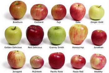 applechart