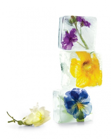 icecubes-flowers-0511mld107066_hd